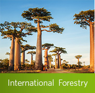 Learn more about the Master of International Forestry Program