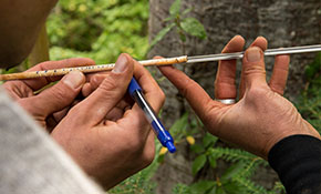MSFM students taking a tree core sample to determine the age of the tree